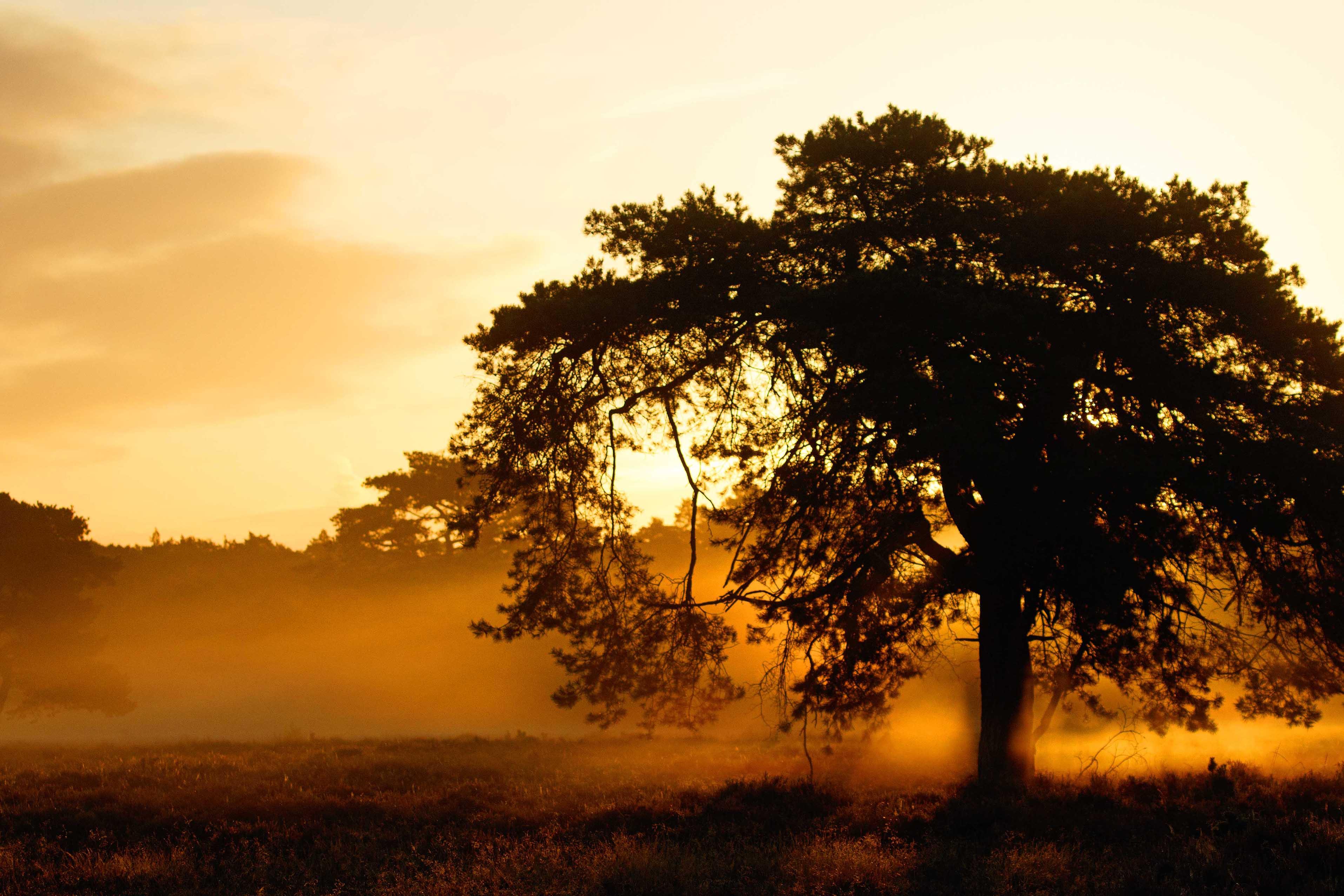 De opkomende zon die de paarse heide een sprookjesachtig aanzien geeft - Foto: ©De Veluwenaar