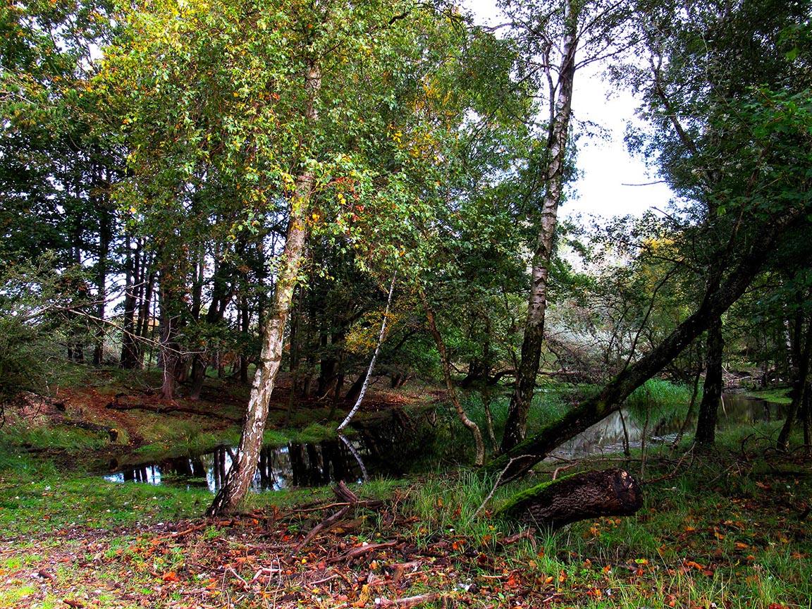 Een vijver die op een schitterende wijze is ingepast in het landschap Foto: ©Fransien Fraanje