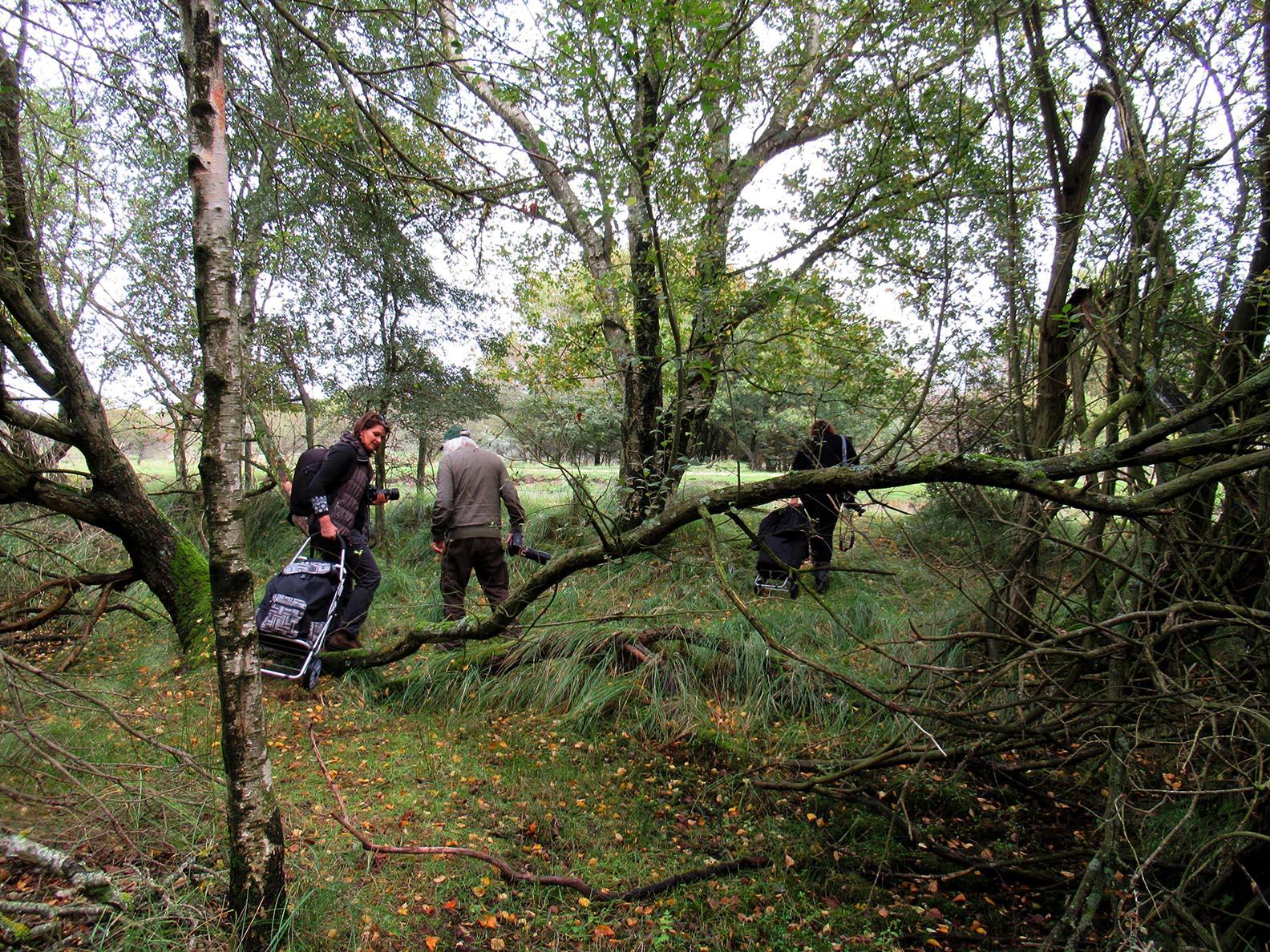 Kromgegroeide of omgevallen bomen, het maakt allemaal niets uit - Foto: ©Fransien Fraanje