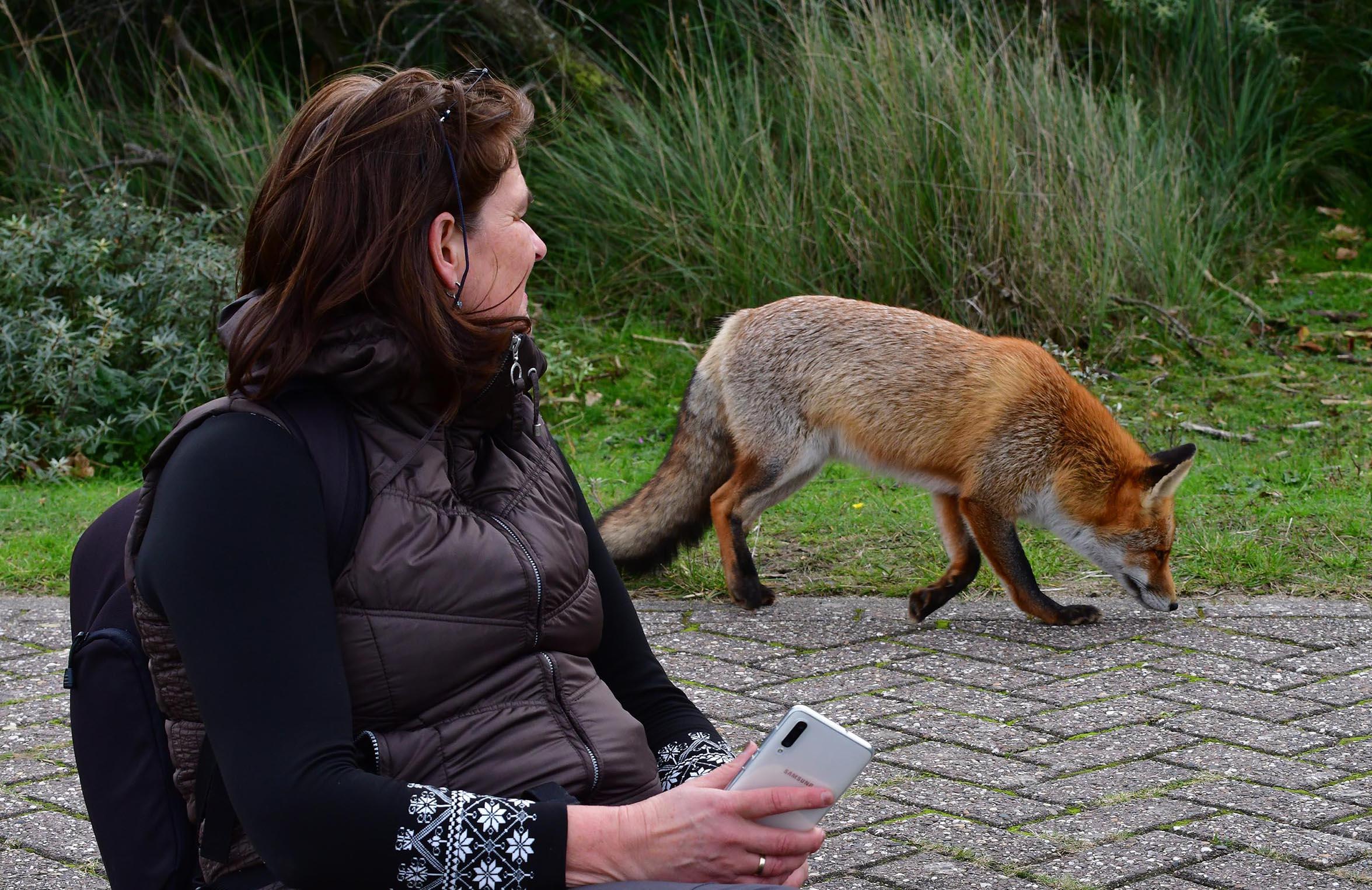 Nel Vlieland volgt de vos op de voet...