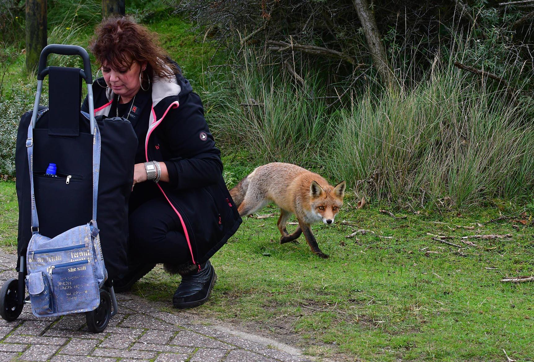 maar... de vos ziet blijkbaar iets anders - Foto's: ©Louis Fraanje