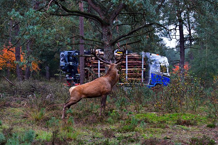 Hubertus kijkt de vrachtwagen achterna – Foto: ©Louis Fraanje