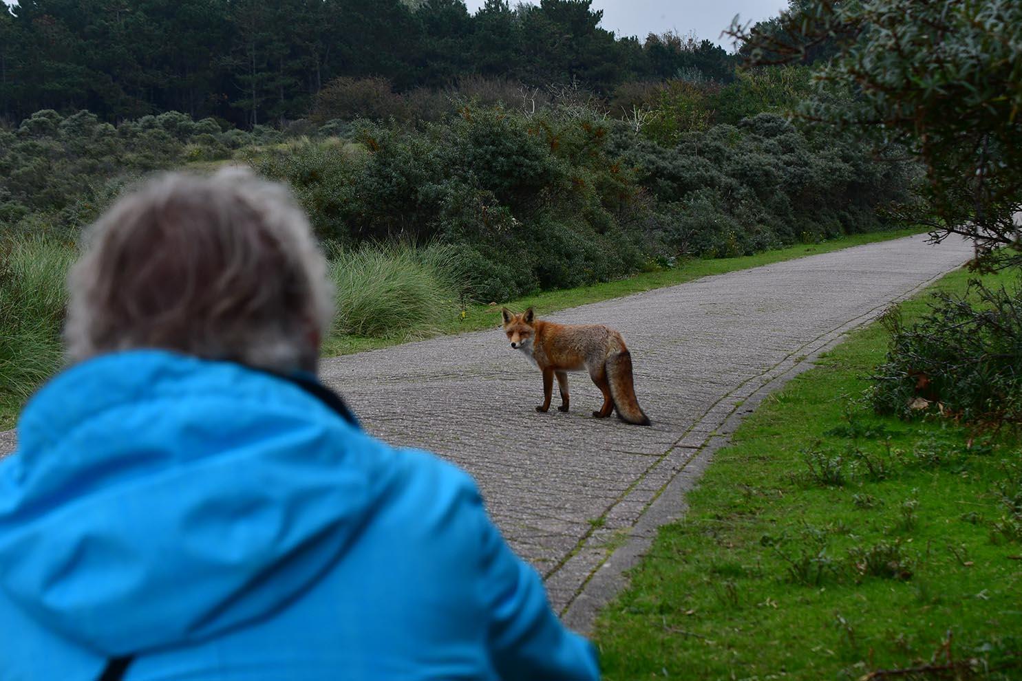 Dan steekt er ineens vlak voor ons een vos de weg over – Foto: ©Louis Fraanje