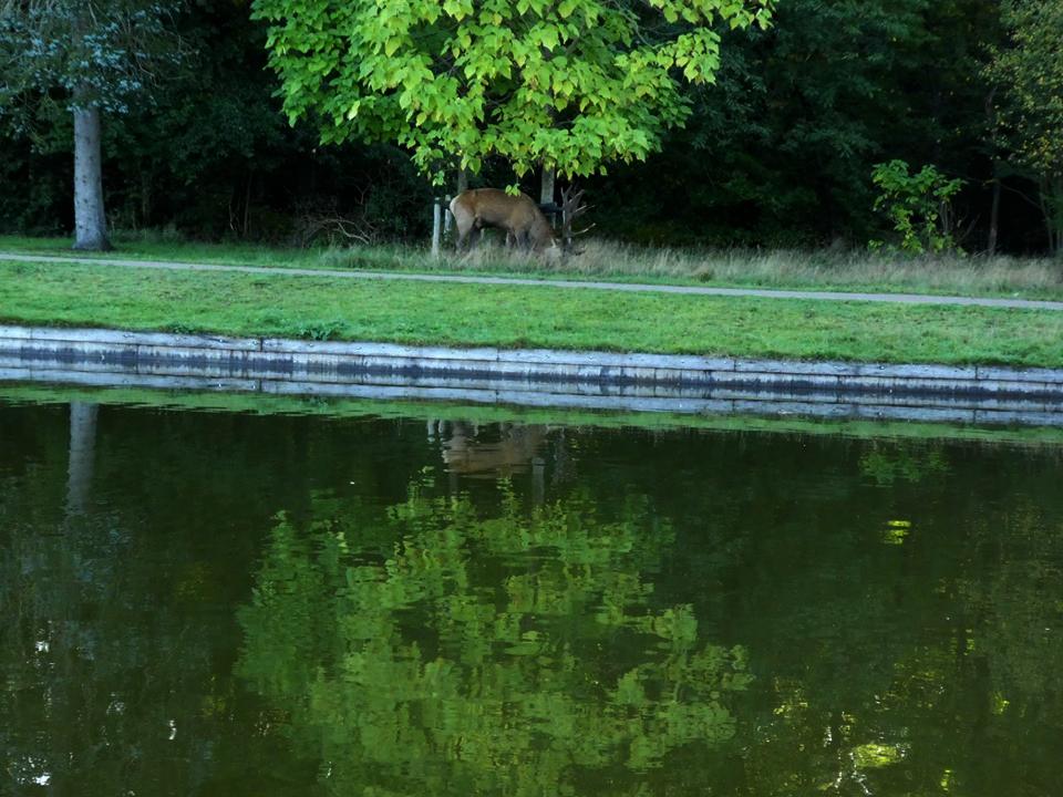 Aan de overkant van de grote vijver zagen we Hubertus lopen - Foto: ©Florus van den Berg
