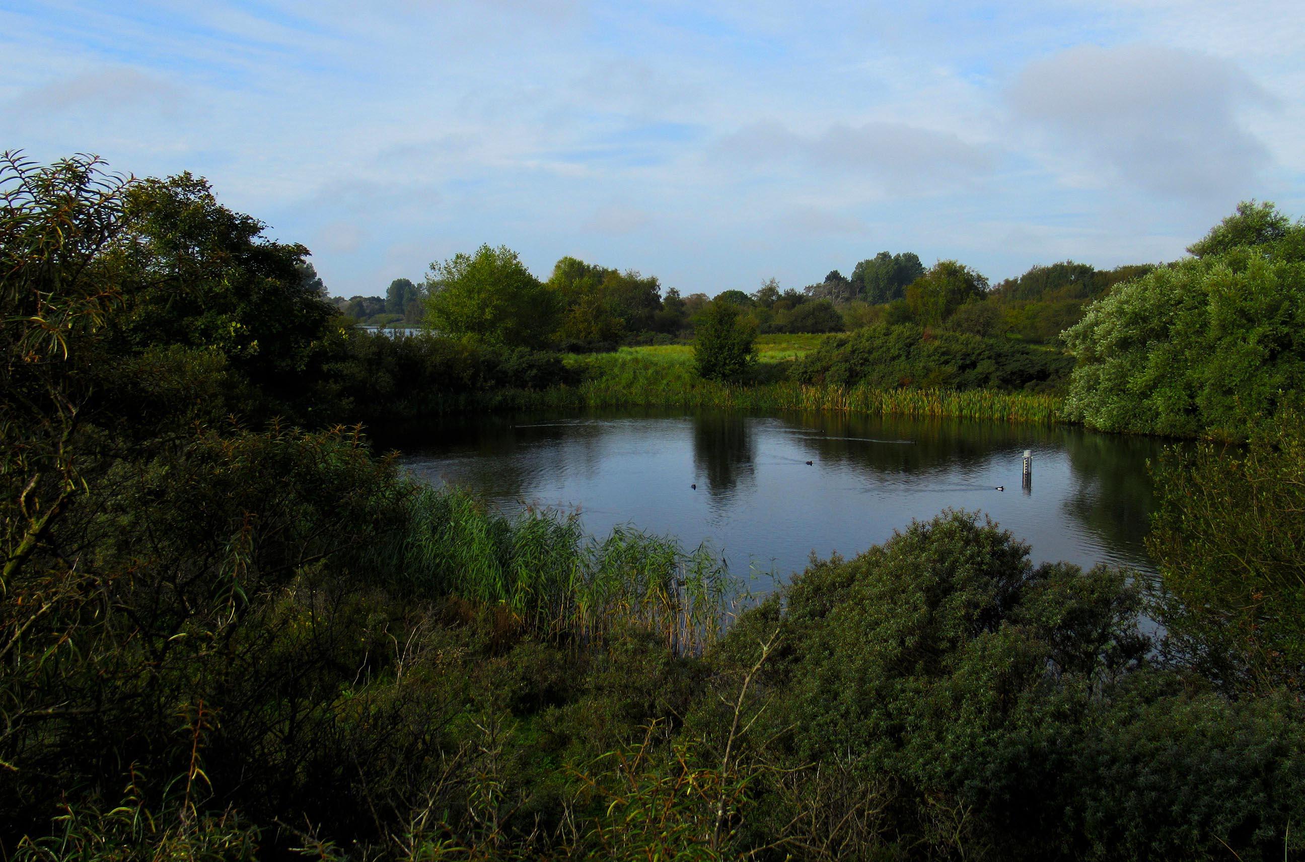 De watervijvers in het gebied hebben veelal een natuurlijke vorm - Foto: ©Fransien Fraanje