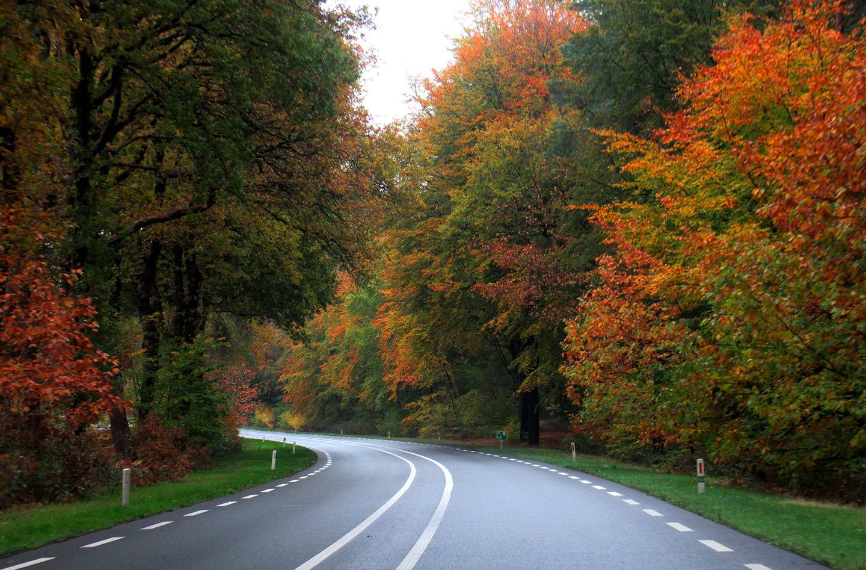 Het schitterende kleurenpalet links en rechts langs de Apeldoornseweg – Foto: ©Louis Fraanje