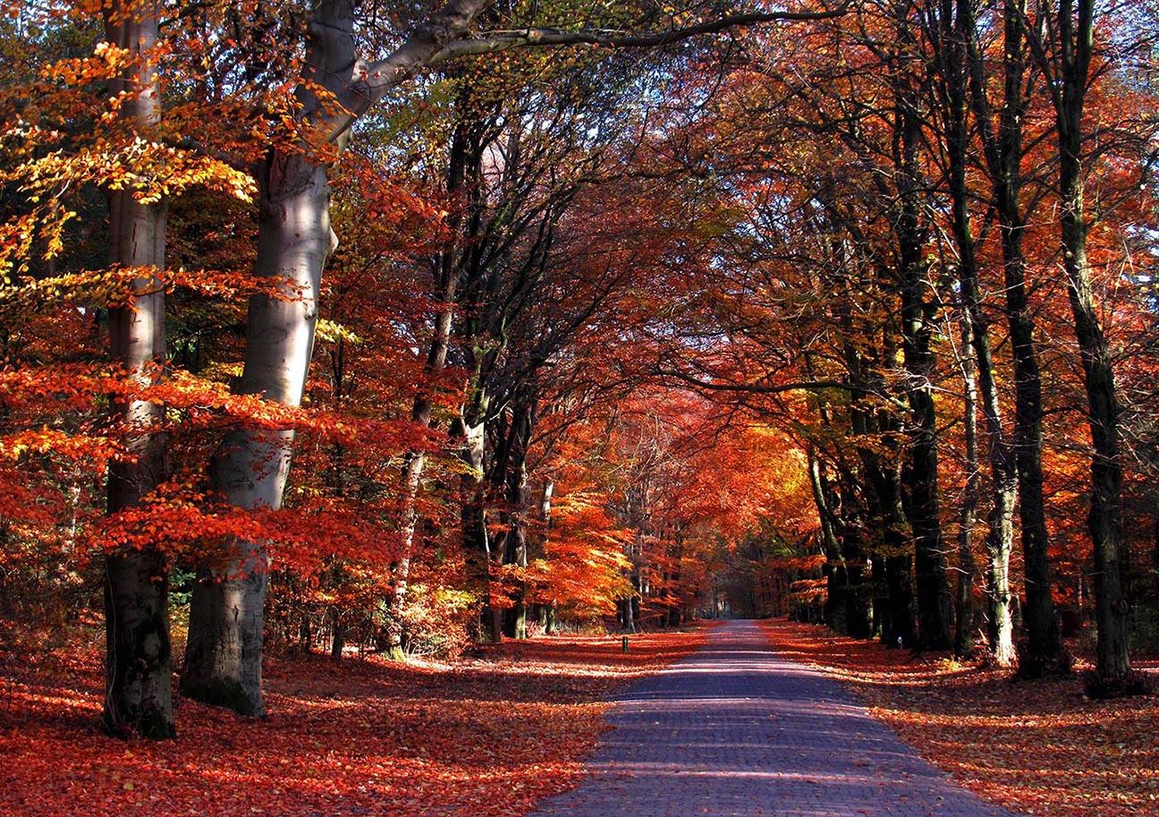 Prachtige herfstkleuren op de Houtkampweg bij de Pampel – Foto: ©Louis Fraanje