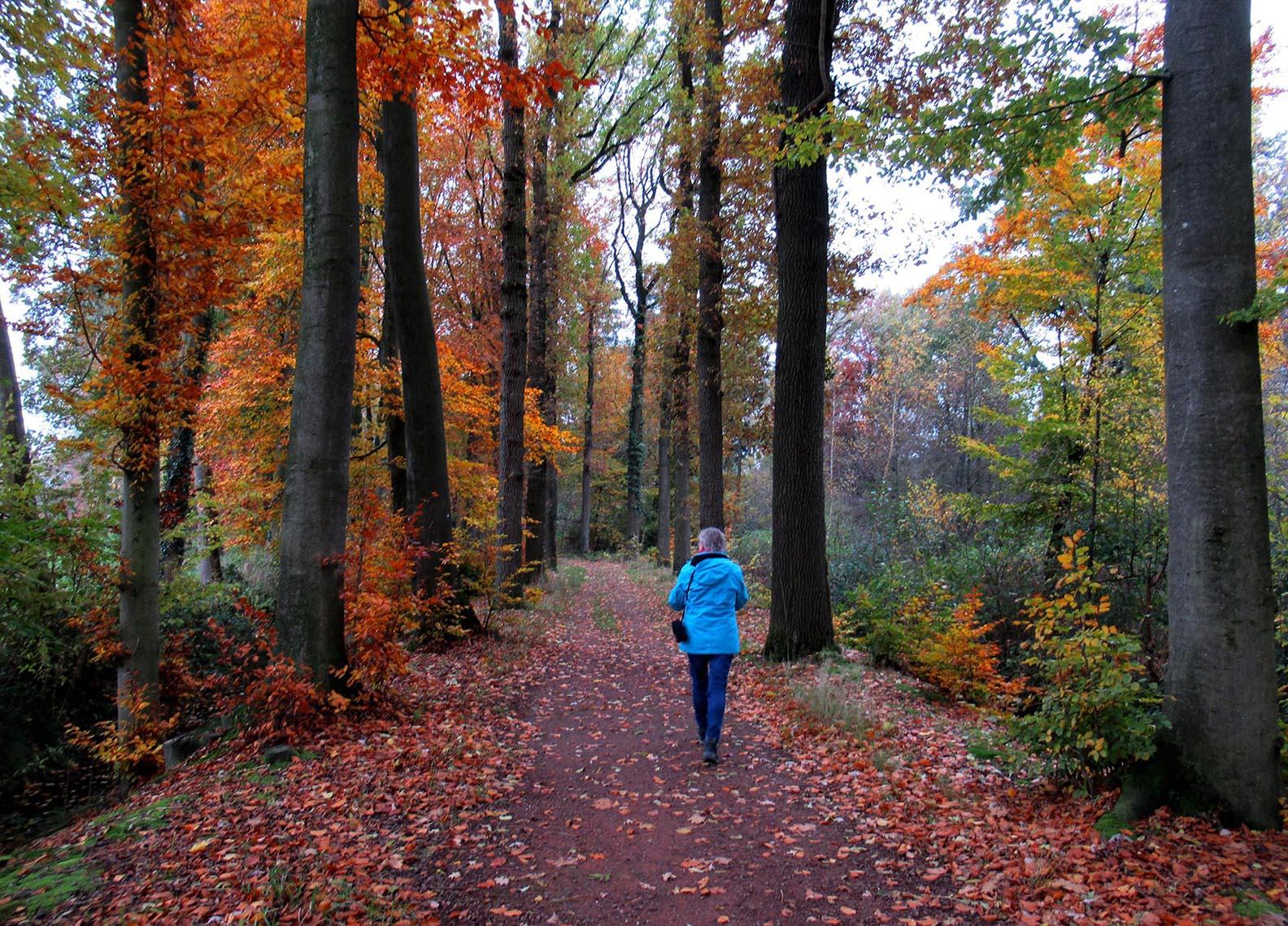 Fransien loopt tussen de prachtige coulissen van het herfstbos – Foto: ©Louis Fraanje