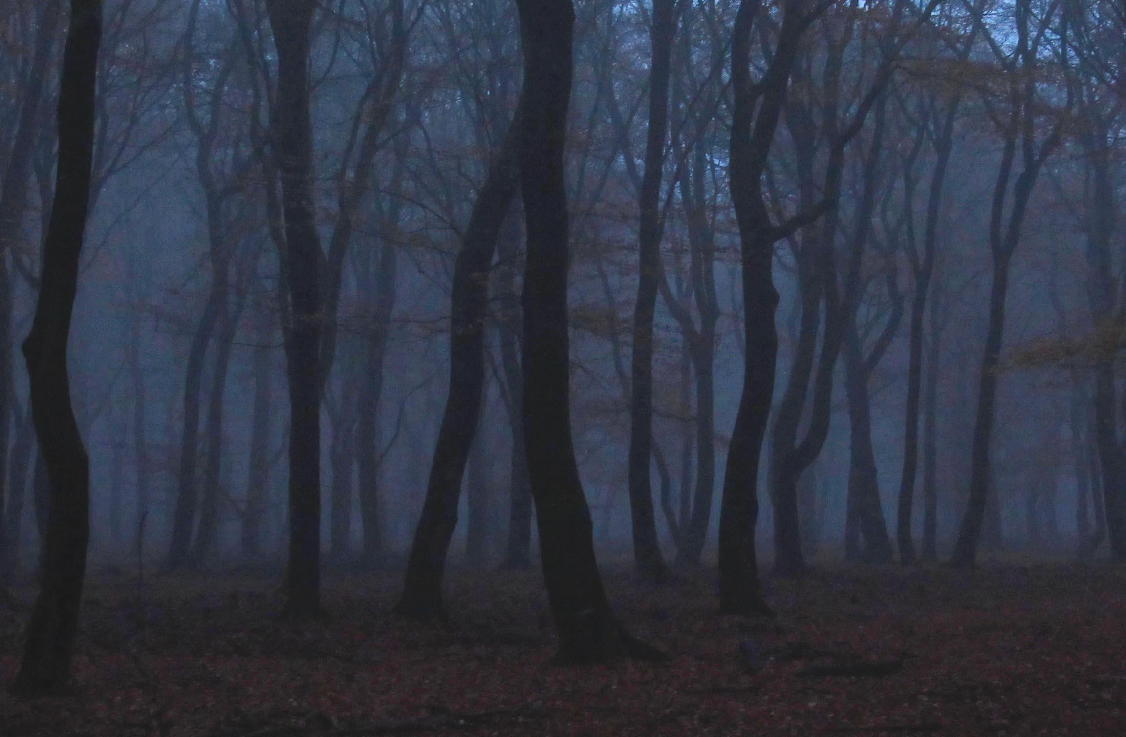 Tegen de avond kwam er mist opzetten in het oude beukenbos - Foto's: ©Louis Fraanje