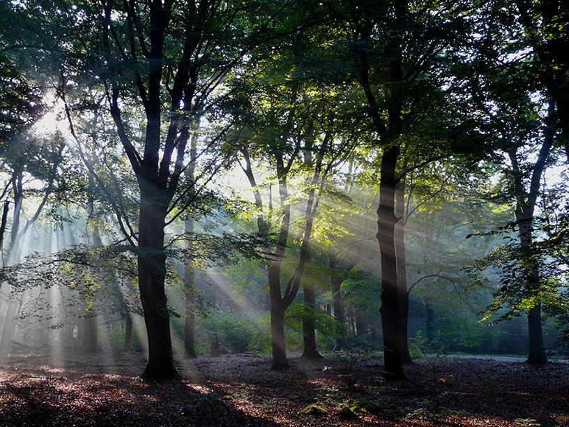 Morgenstemming in het Veluwse bos - Foto: ©Louis Fraanje
