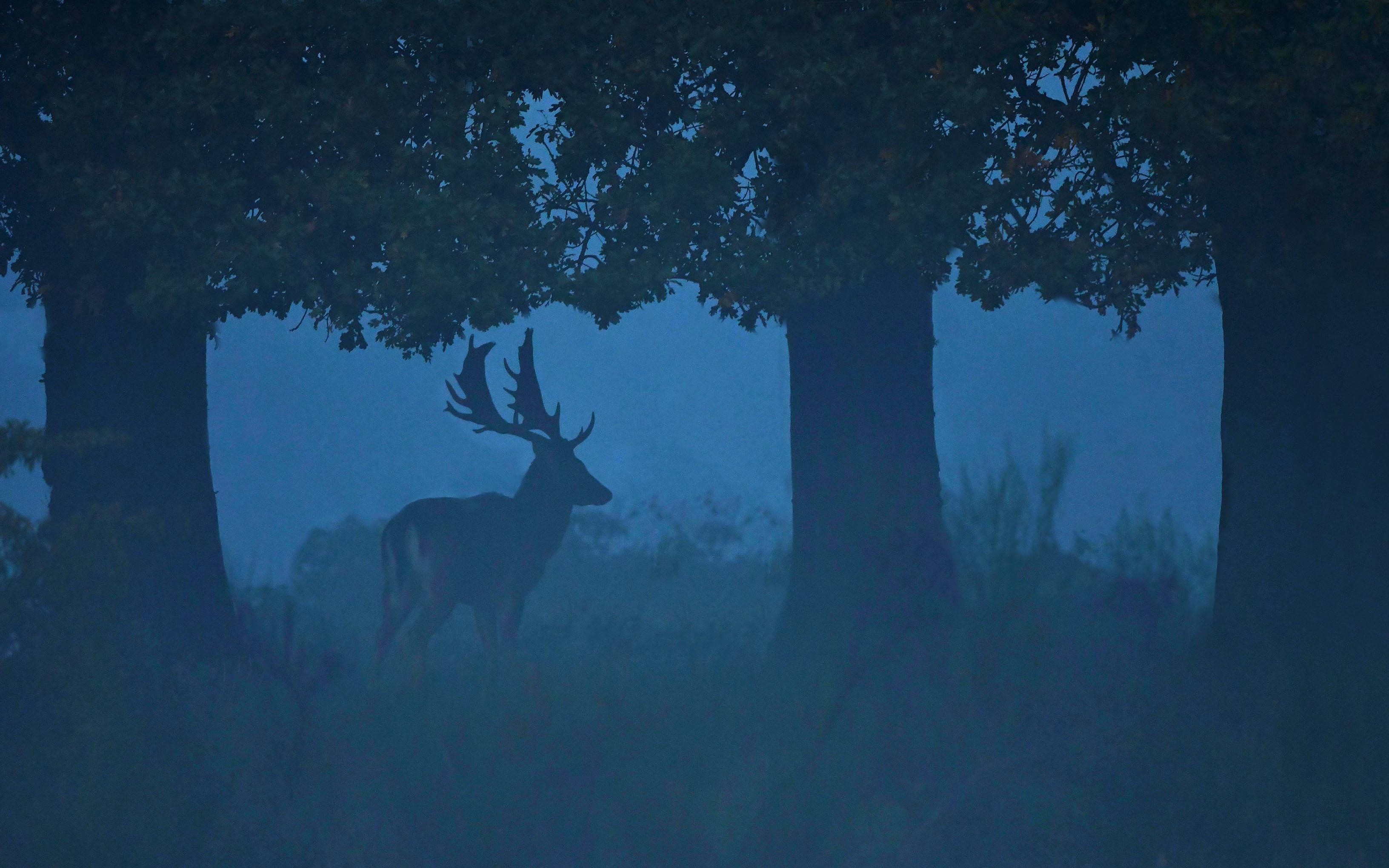 De dambok is niet veel meer dan een silhouet in de laaghangende mist – Foto: ©Louis Fraanje