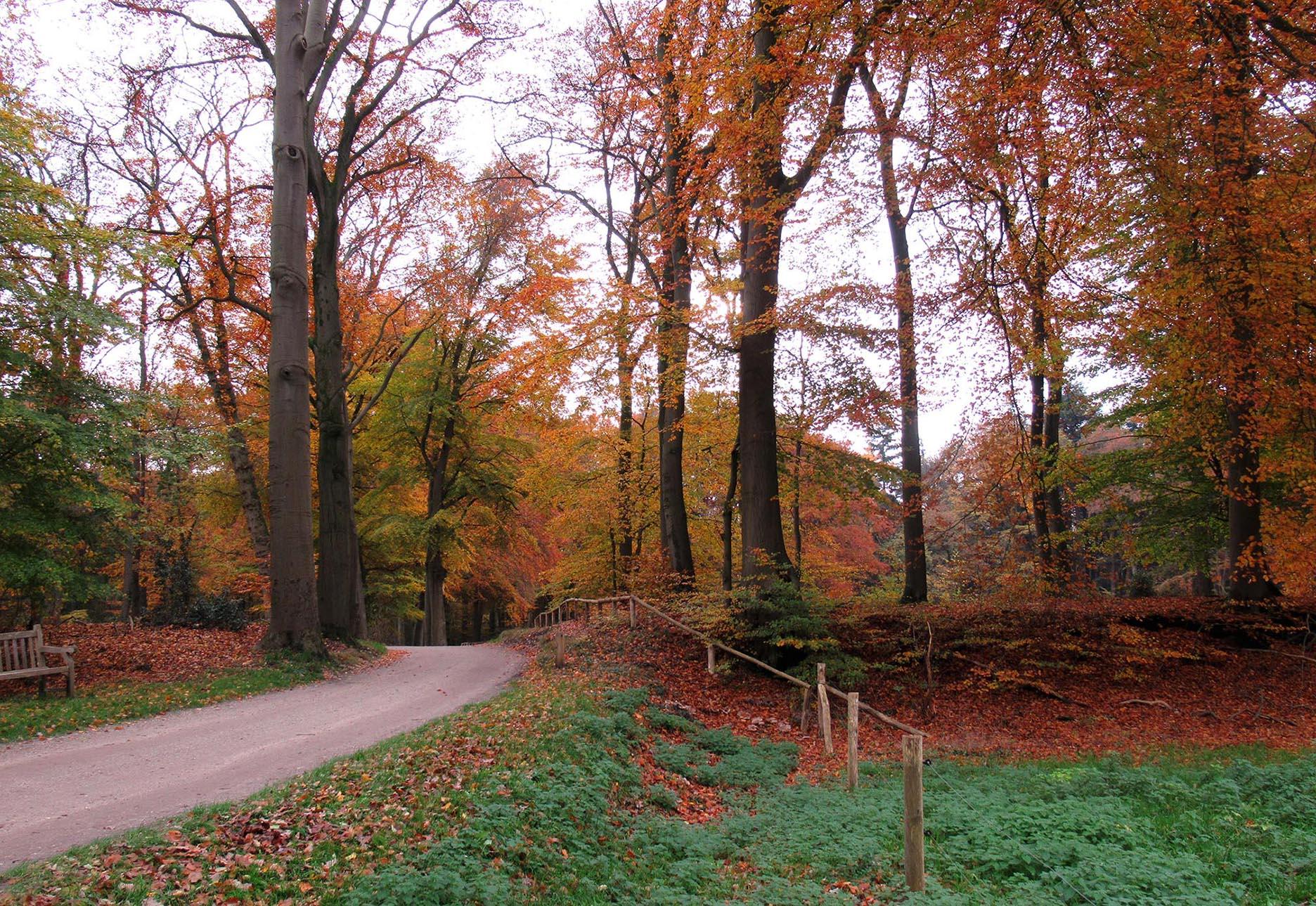 Een prachtige houtwal achter het landhuis Oud Groevenbeek – Foto: ©Louis Fraanje