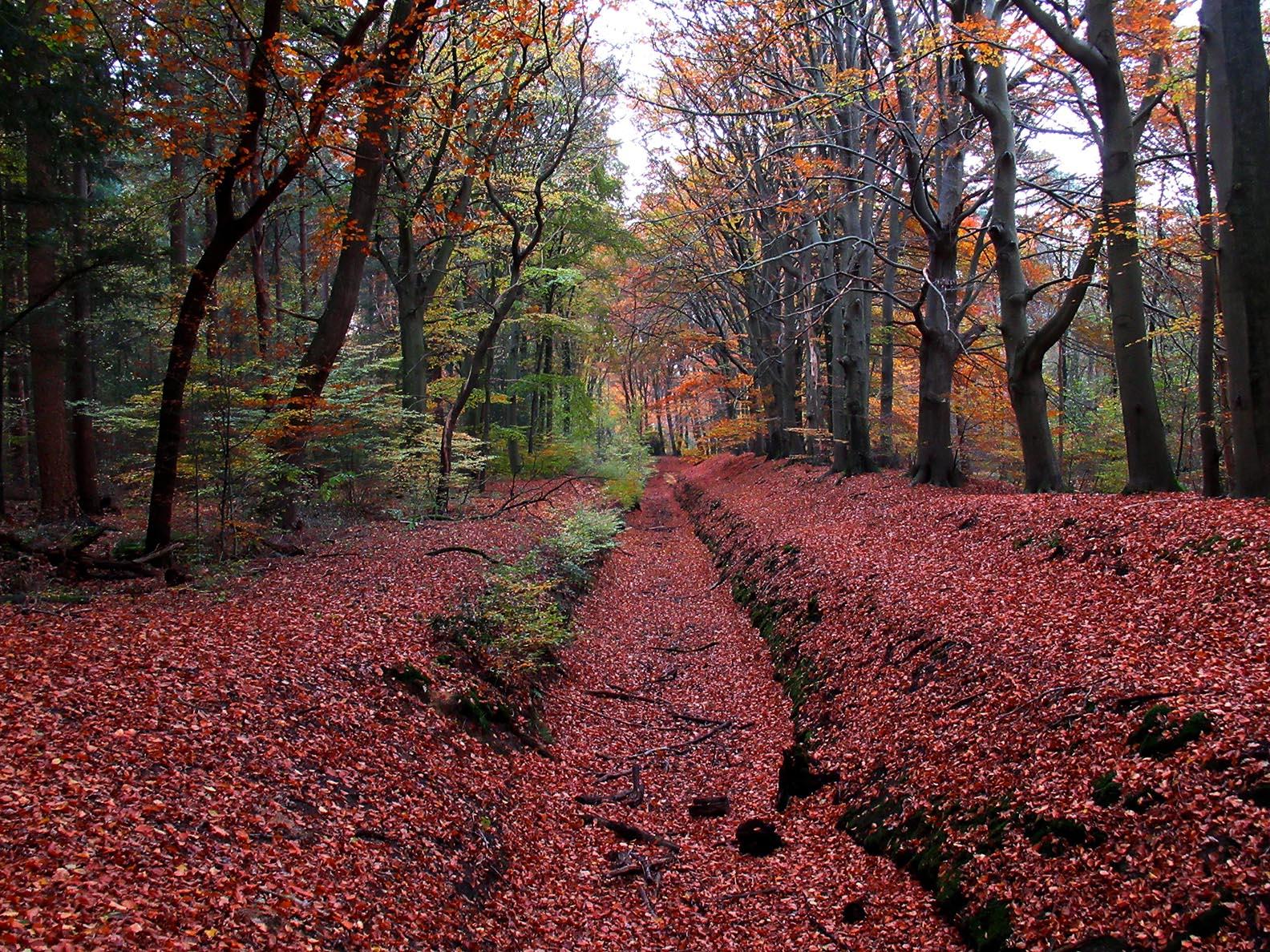 De oude beekloop van de Groevenbeek op het landgoed is meestal droog – Foto: ©Louis Fraanje