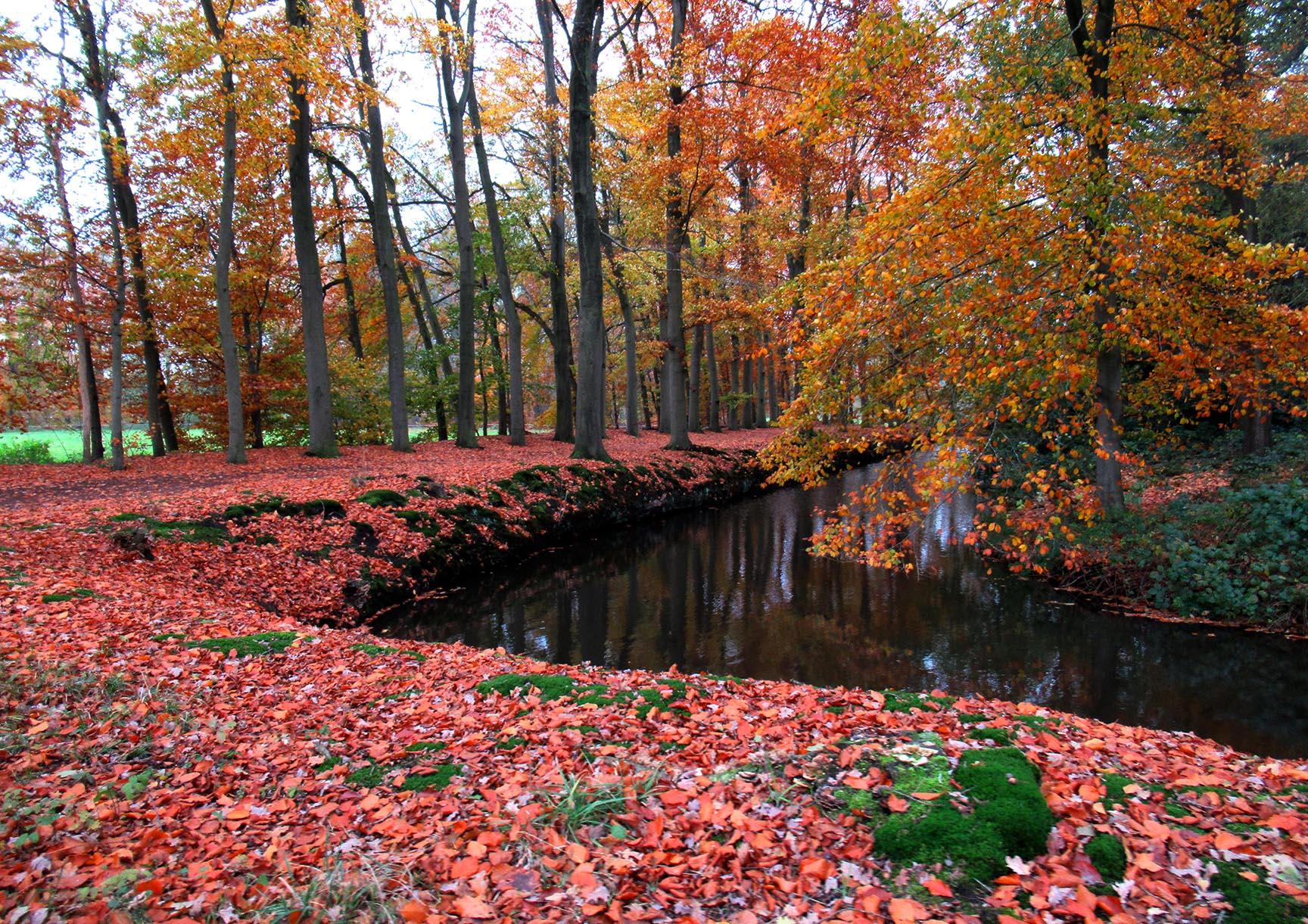 De bospaden worden links en rechts omgeven door water – Foto: ©Fransien Fraanje
