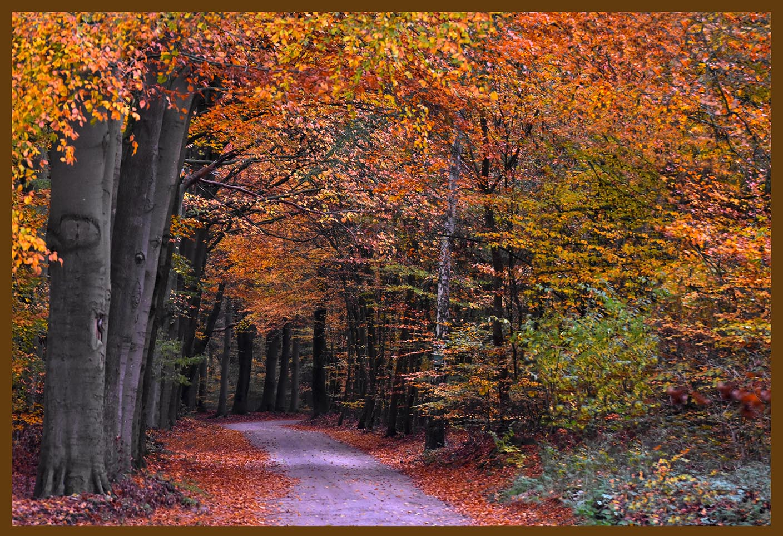 Herfst op de Veluwe is voel- en zichtbaar op het bospad van Oud Groevenbeek – Foto: ©Louis Fraanje