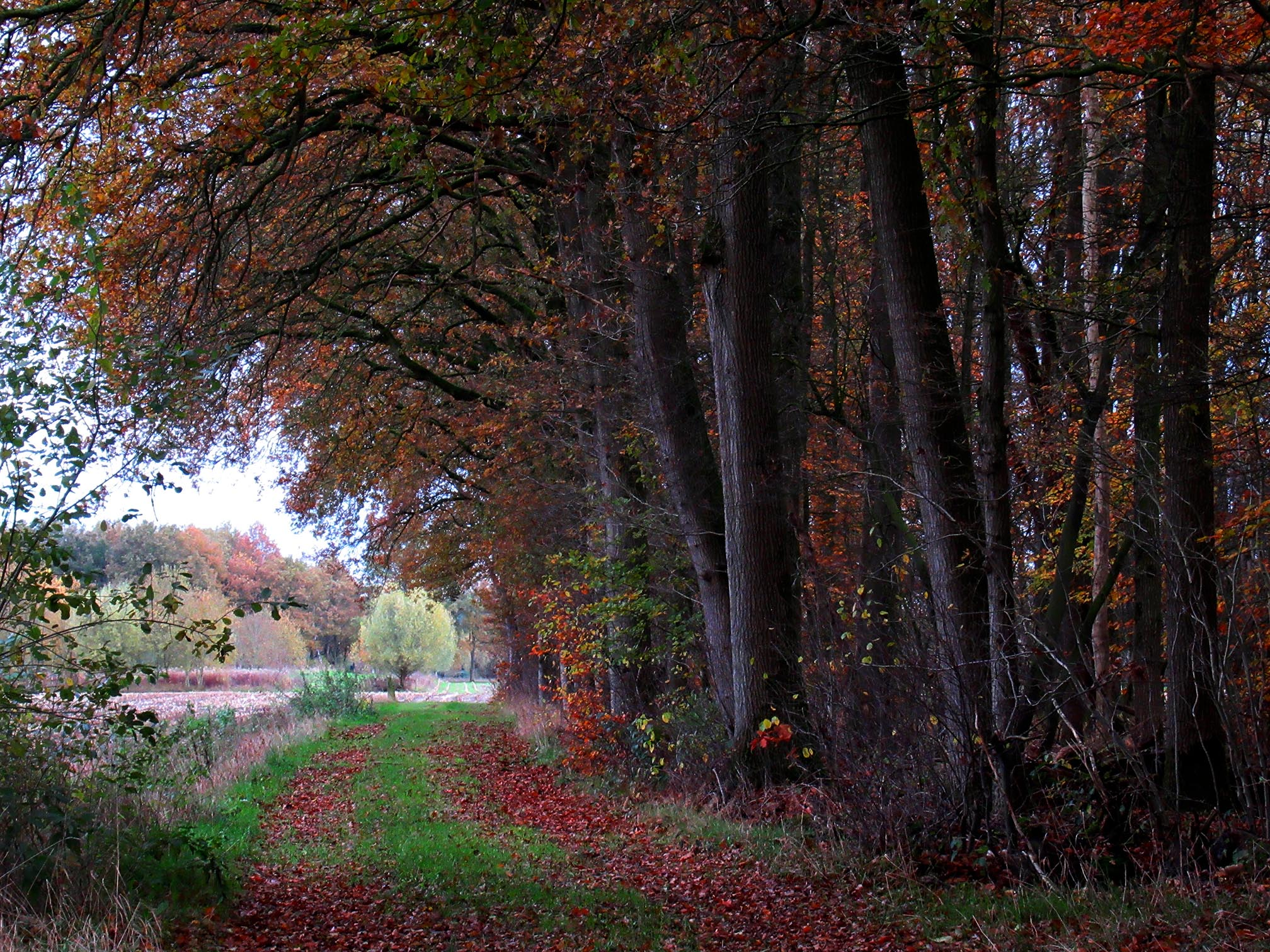 Een landweggetje tussen het bos en de weilanden bij de Plagweg - Foto: ©Louis Fraanje