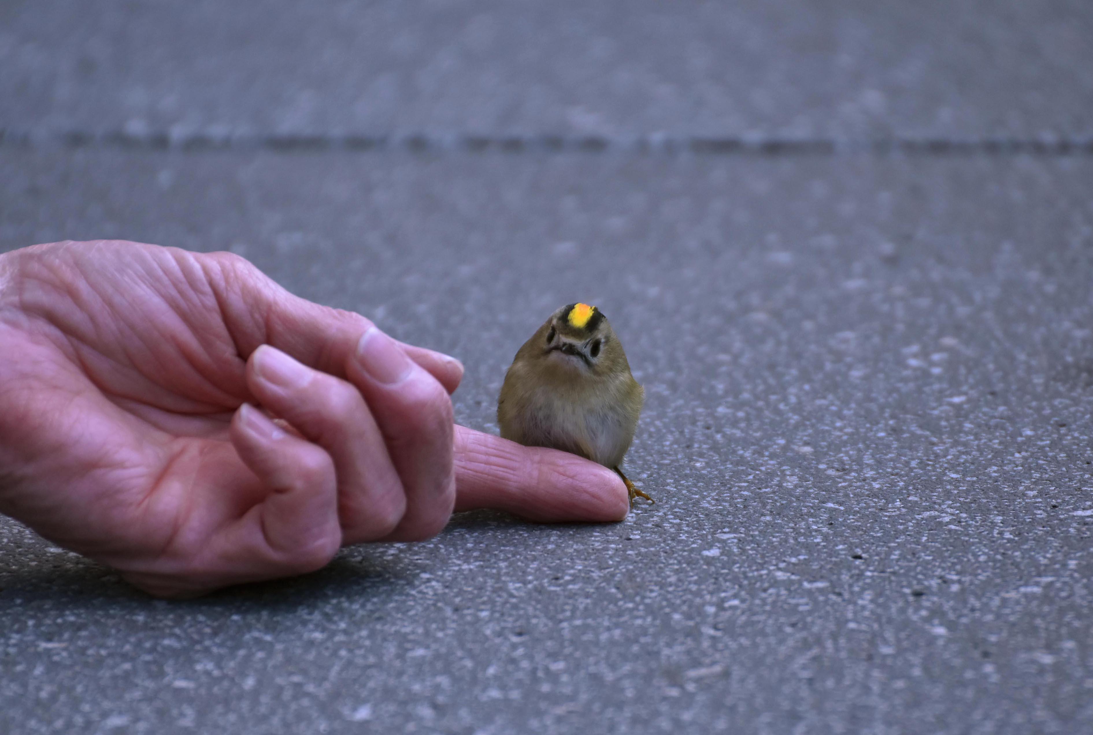 maar... wat een klein vogeltje - Foto's: ©Louis Fraanje
