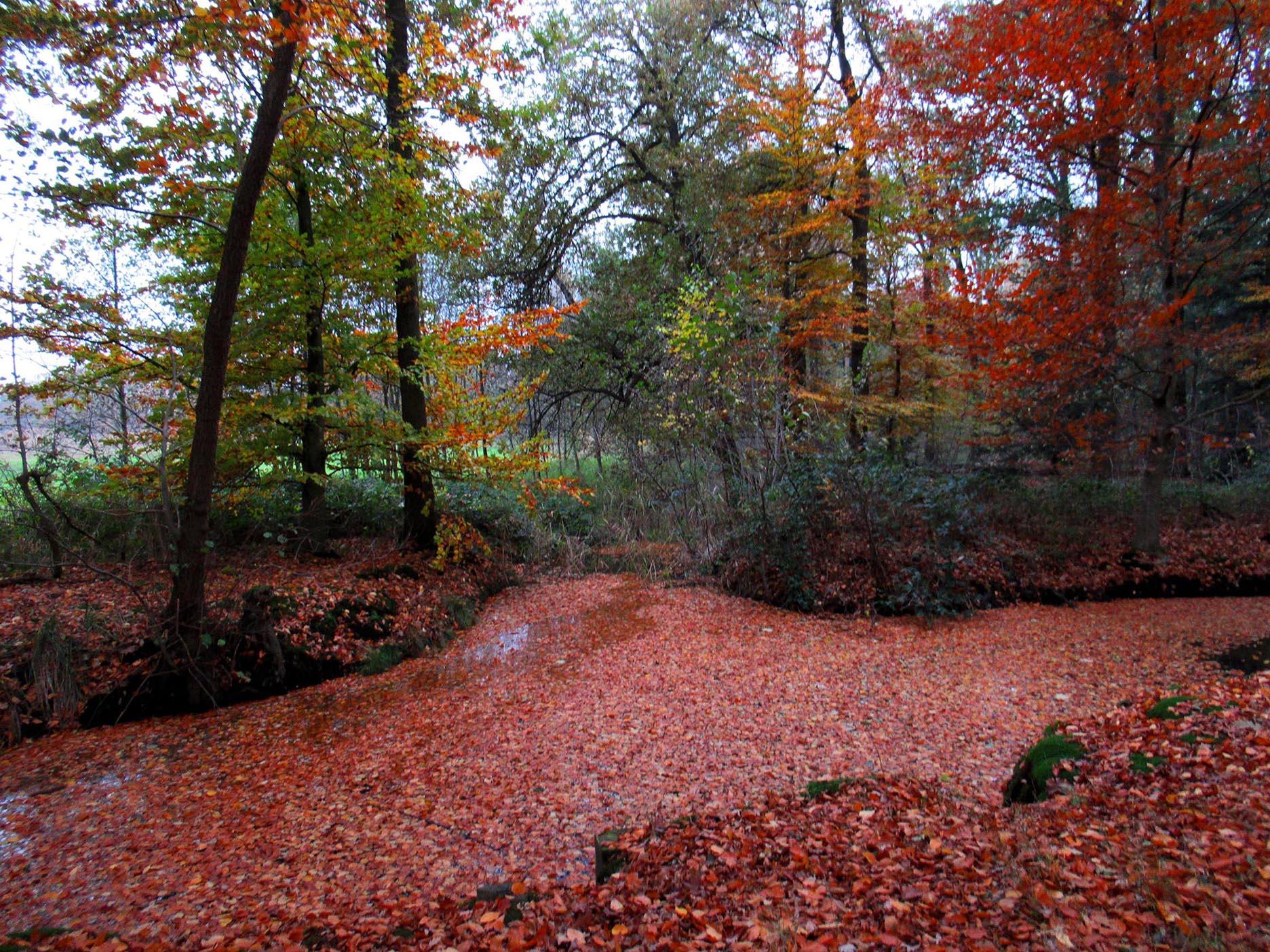 De sloten in het bos liggen vol met bladeren– Foto: ©Louis Fraanje
