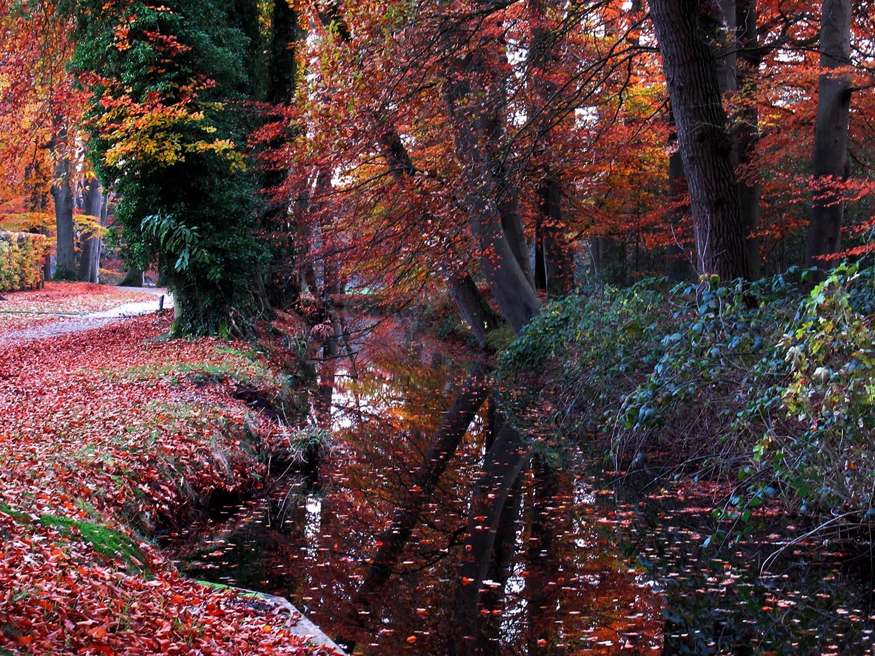De Staverdensebeek stroomt dwar door het Landgoed Staverden – Foto: ©Louis Fraanje