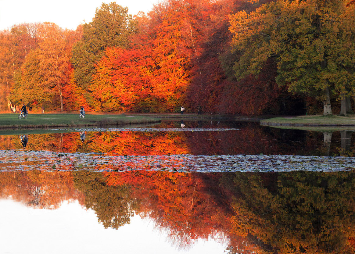 Prachtige herfstkleuren weerspiegelen in de grote vijver op NP De Hoge Veluwe - Foto: ©Fransien Fraanje