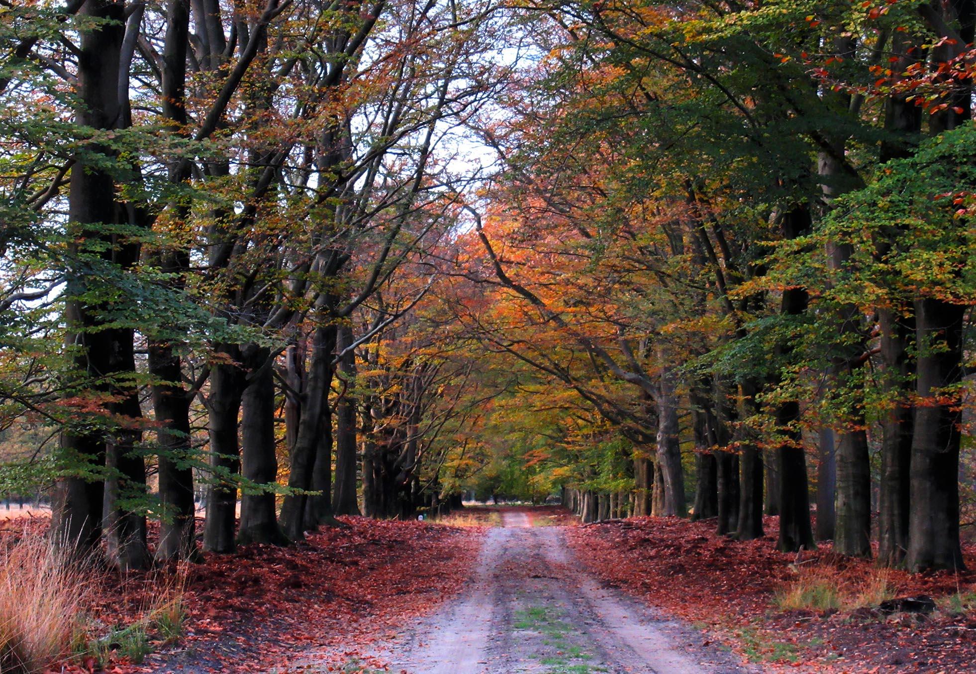 Kleurrijke beukenlaan in het herfstbos – Foto: ©Fransien Fraanje