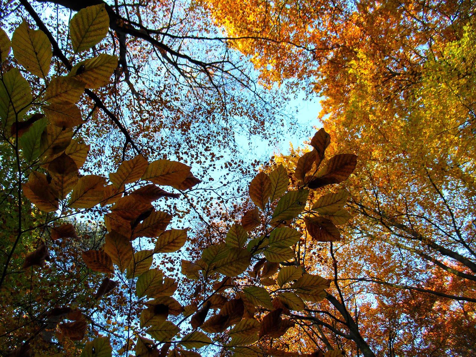 Kleurenspel dwars door het bladerdak van de boomkruinen – Foto: ©Fransien Fraanje