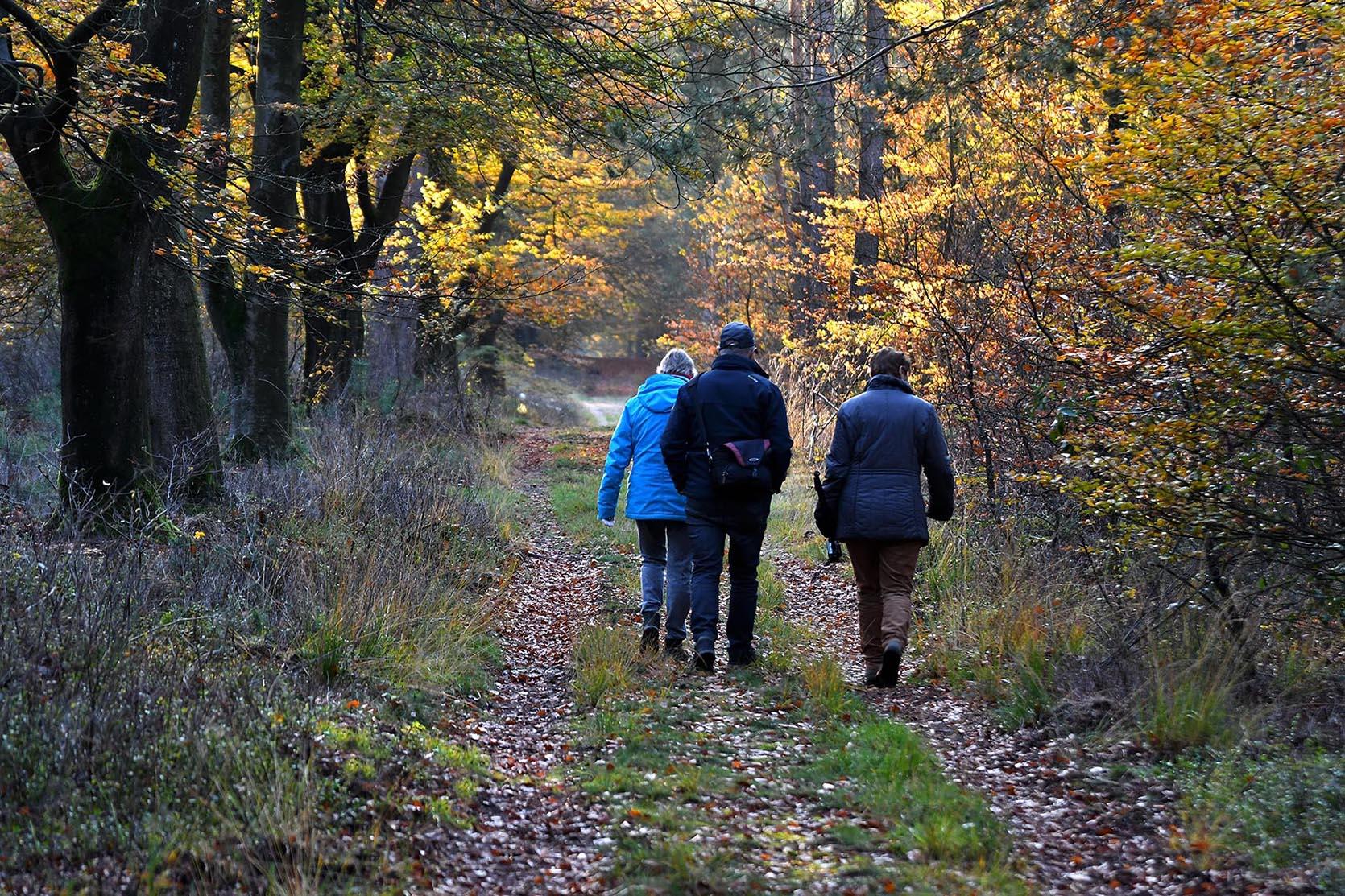Zwervend door het herfstbos met onze natuurvrienden – Foto: ©Louis Fraanje