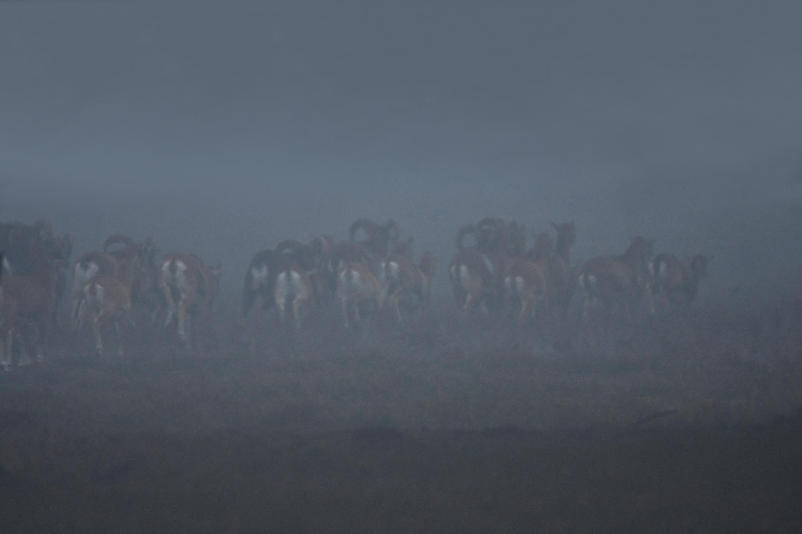 Nog een laatste blik en dan zijn ze verdwenen in de mist.... - Foto's: ©Louis Fraanje