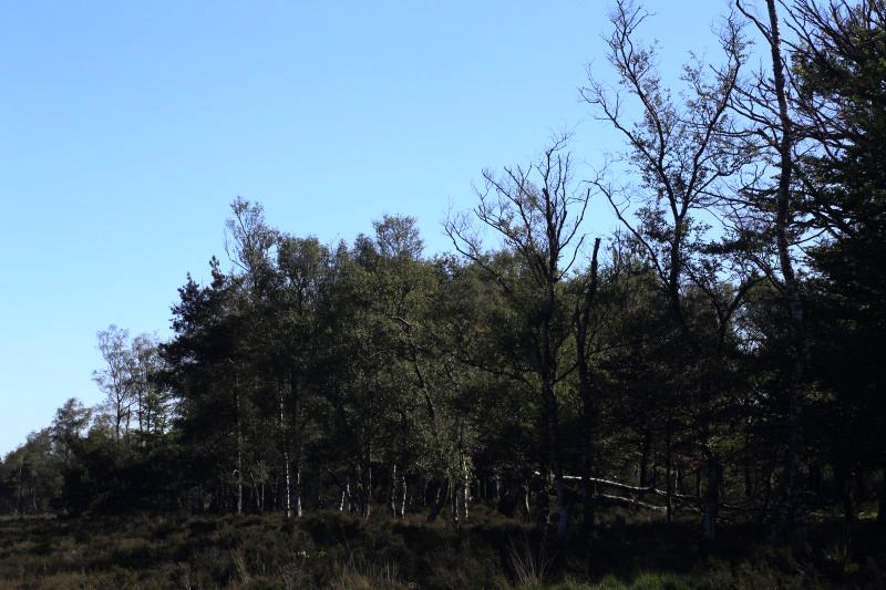 Voorjaar 2019 waren verbrande boomtoppen en minder blad aan de bomen zichtbare gevolgen van de gortdroge zomer van 2018 – Foto: ©Yvonne Arentzen