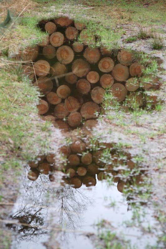 Houtoogst perst de bodem samen – Foto:©Yvonne Arentzen