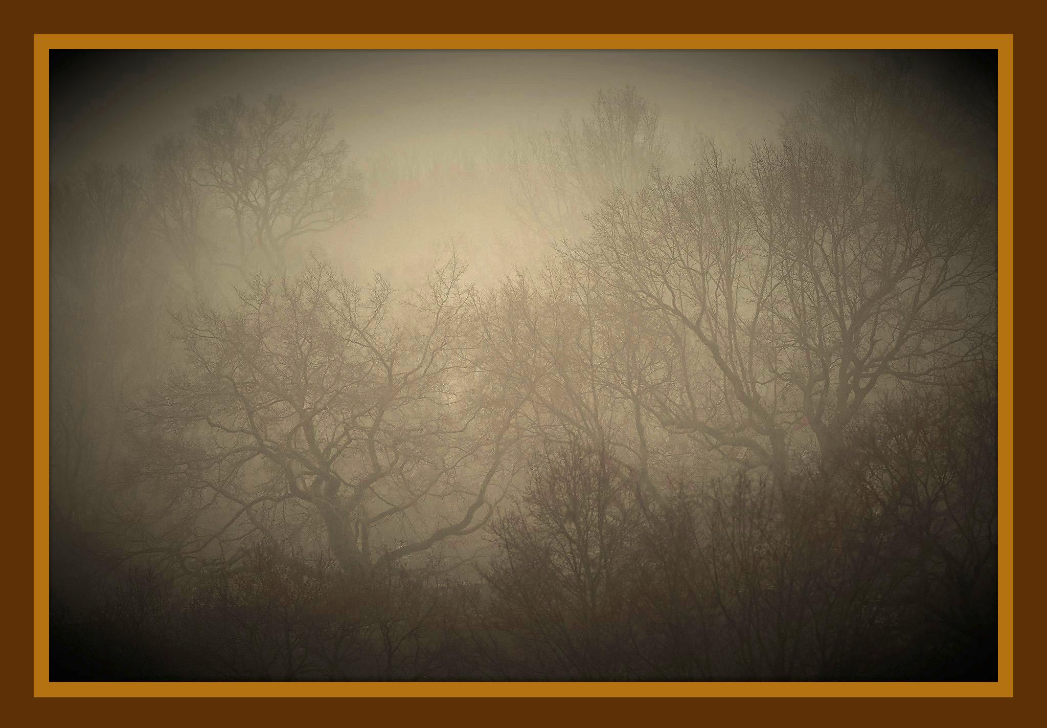 Grillig lijnenspel van bomen in de mist - Foto: ©Louis Fraanje