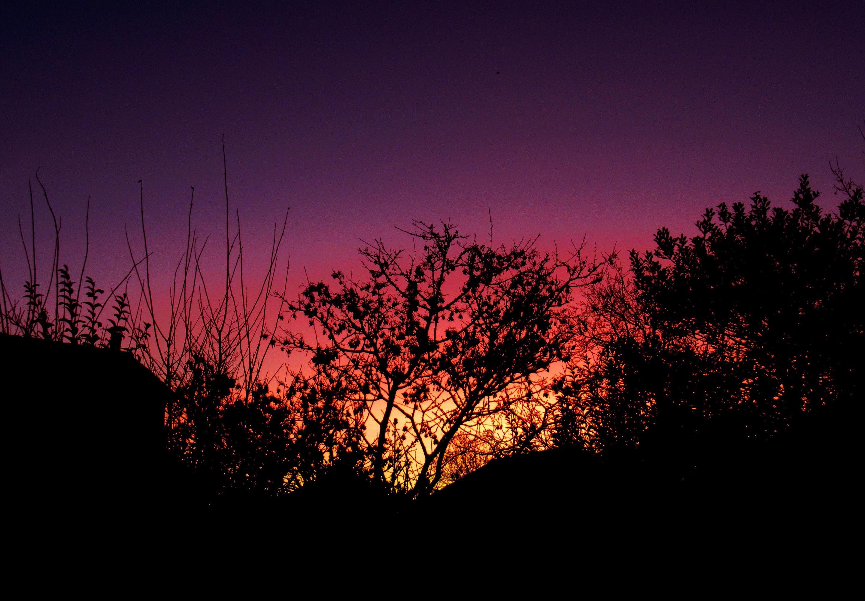 Prachtig ochtendgloren werd tussen het struikgewas door zichtbaar – Foto: ©Louis Fraanje
