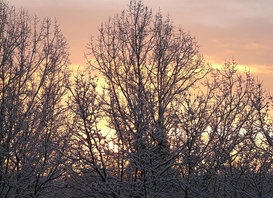 Ochtendgloren op een winterse morgen in het Veluwse bos – Foto: ©Louis Fraanje