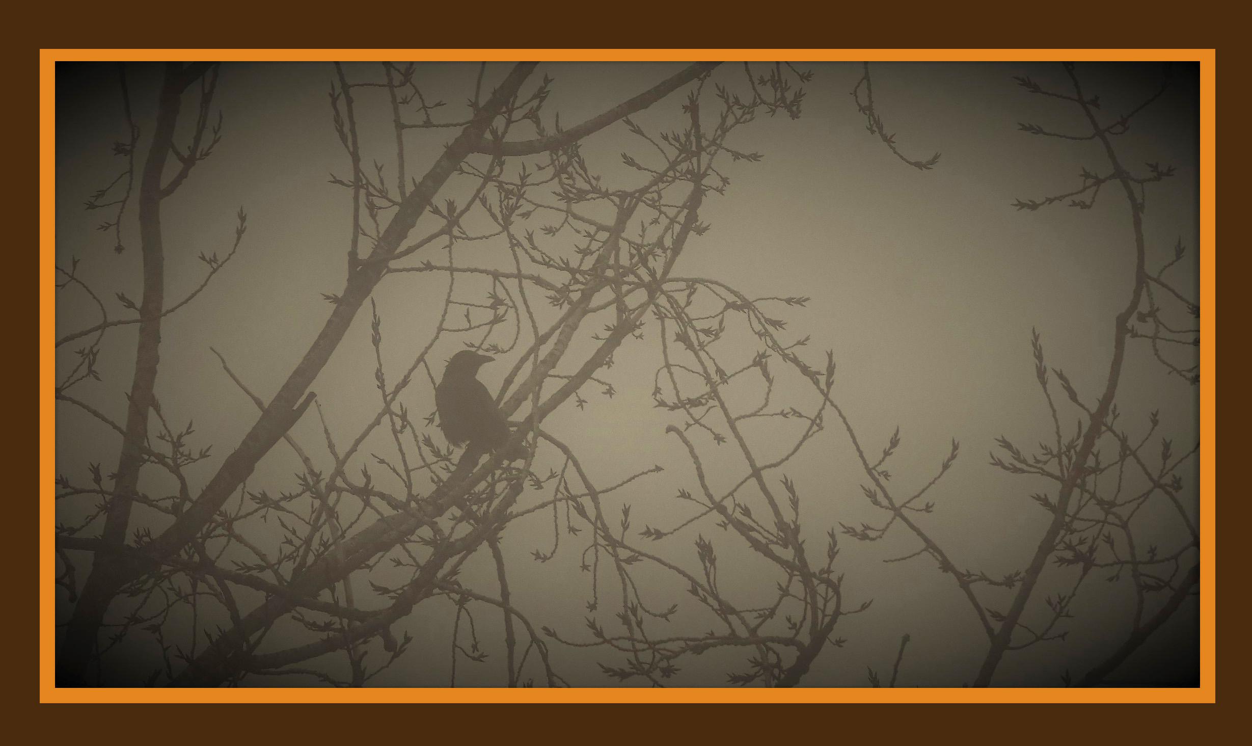 Tussen de wirwar van takken zat een eenzame vogel - Foto: ©Louis Fraanje