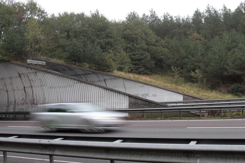 Faunapassage Woeste Hoeve over snelweg A50 – Foto: ©Yvonne Arentzen