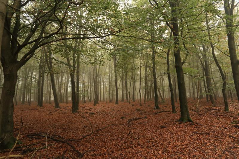 Hoe zal dit bos er over enkele tientallen jaren uitzien? – Foto: ©Yvonne Arentzen