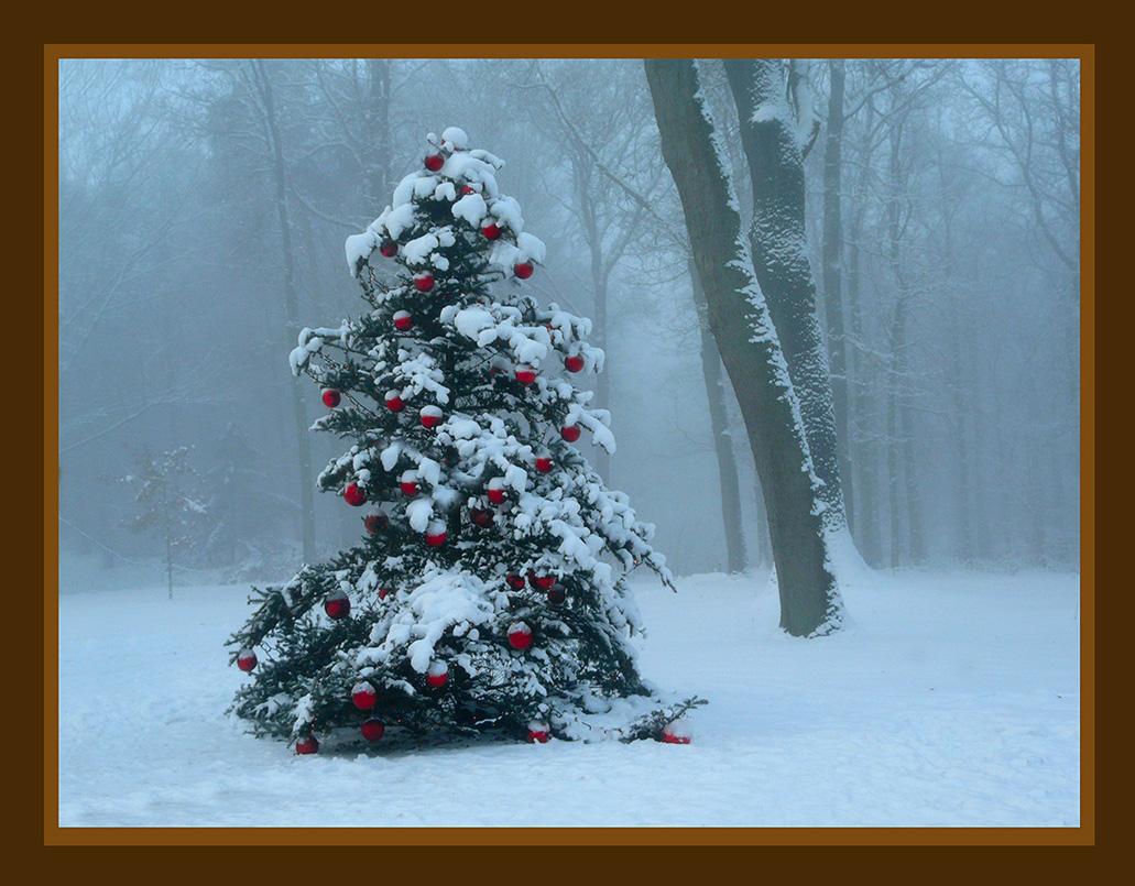 Kerstboom in het Nationale Park De Hoge Veluwe op Tweede Kerstdag 2010 – Foto: ©Louis Fraanje