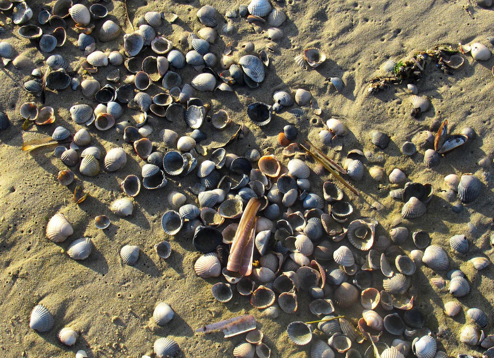 Kleine schatten uit de zee nu op het strand als een natuurlijk stilleven – Foto: ©Fransien Fraanje