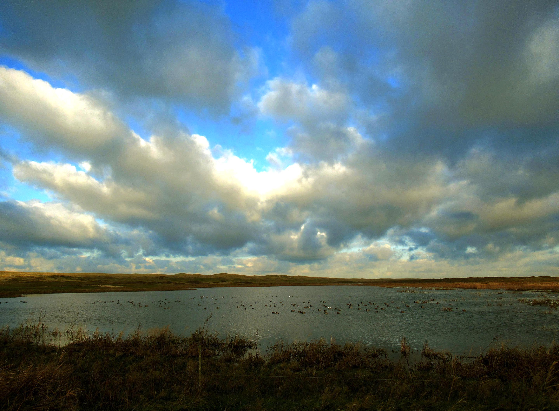 De grote waterplas bij De Bollenkamer vol met watervogels - Foto: ©Fransien Fraanje