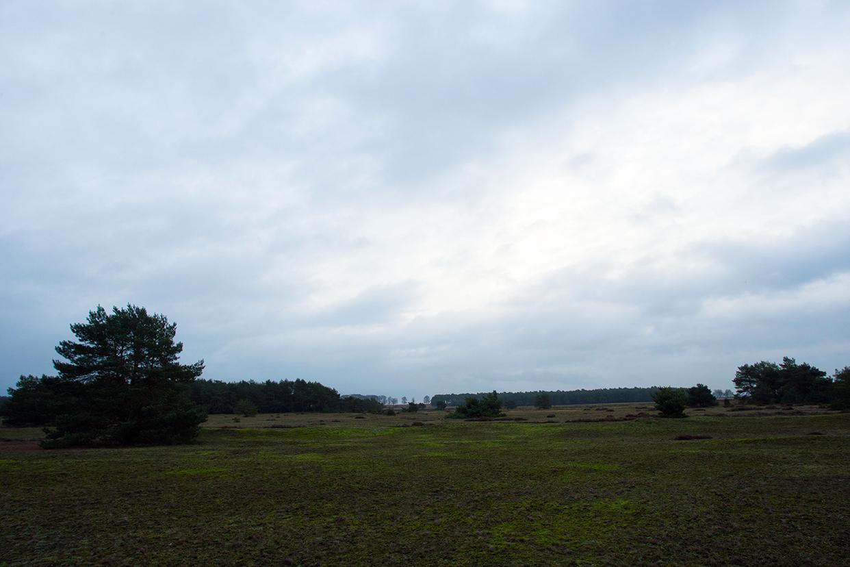 De zuidoostkant van het Oud-Reemsterzand met in de verte het Bosje van Staf – Foto: ©Yvonne Arentzen