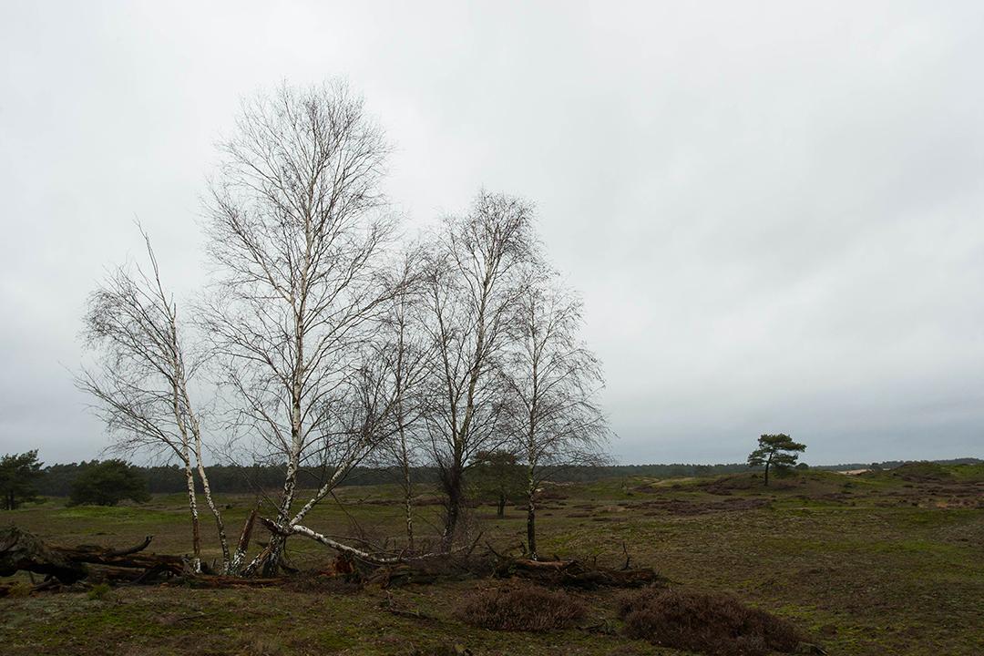 Dat verderop moeflons tussen de heuvels door vluchtten, konden we niet zien – Foto: Yvonne Arentzen