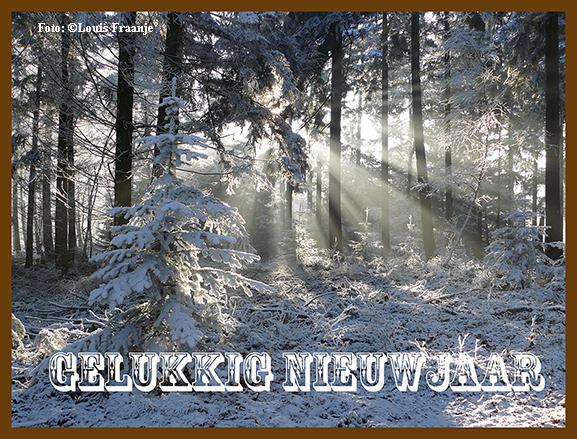 De zon breekt door het winterse bos op de Veluwe - Foto: ©Louis Fraanje
