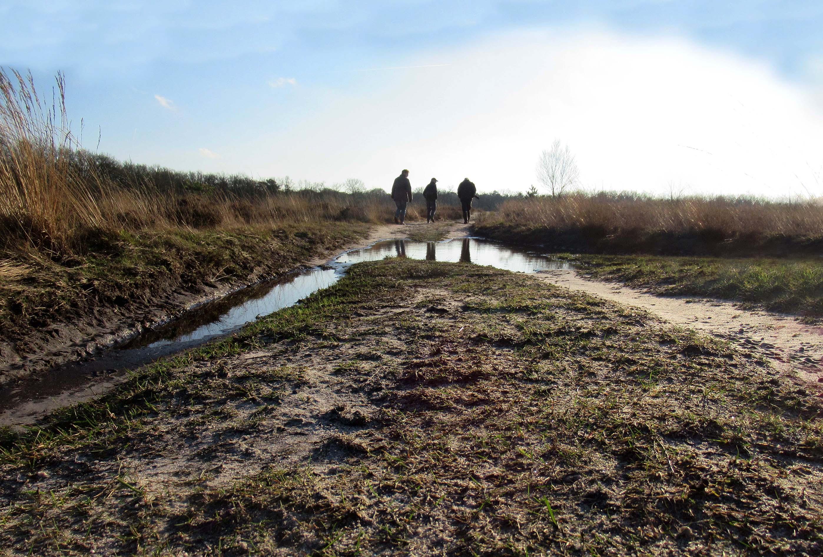 Grote plassen op het bospad door de vele regen van de laatste tijd – Foto: ©Fransien Fraanje