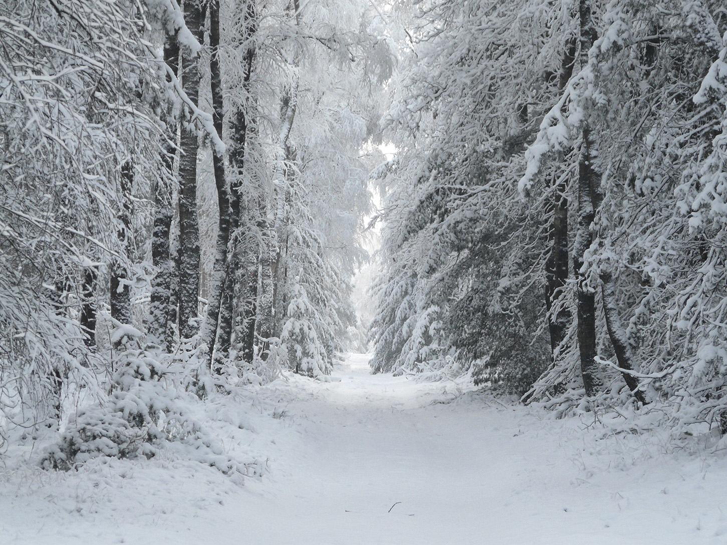 Prachtig doorkijkje tussen de enorme met sneeuw bedekte sparren – Foto: ©Louis Fraanje