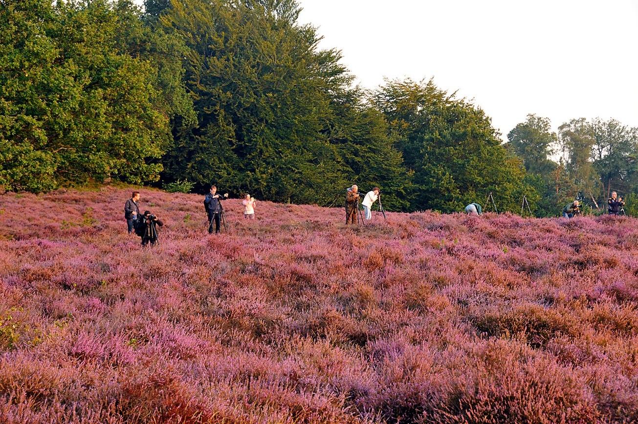 Natuurfotografen en roodwild in het geaccidenteerde terrein rond De Posbank - Foto: ©Ton Heekelaar