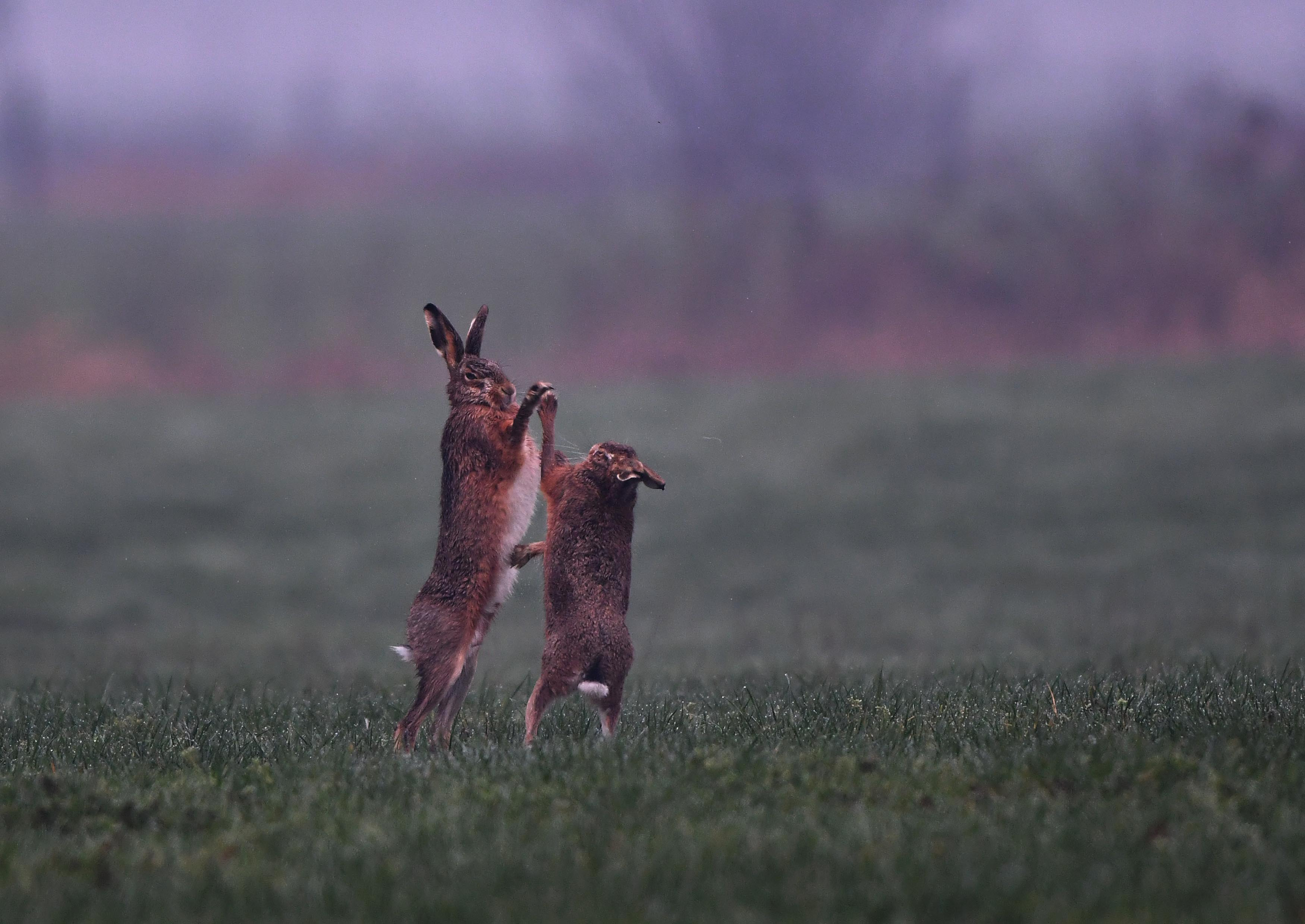 """""""Mag ik dan tenslotte deze dans van u?"""" lijkt het of de rammelaar(links) vraagt aan het moertje.- Foto: ©Louis Fraanje"""