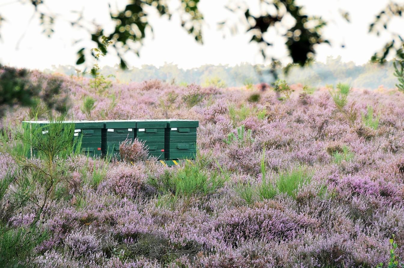 De toenmalige bijenkorven zijn geleidelijk na de 2e - wereldoorlog vervangen door praktische bijen-kasten - Foto: ©Ton Heekelaar