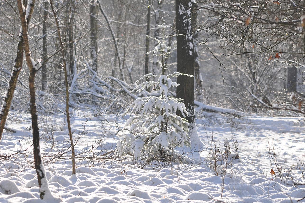 Als de zon doorbreekt wordt het nog mooier in het winterse bos – Foto: ©Louis Fraanje