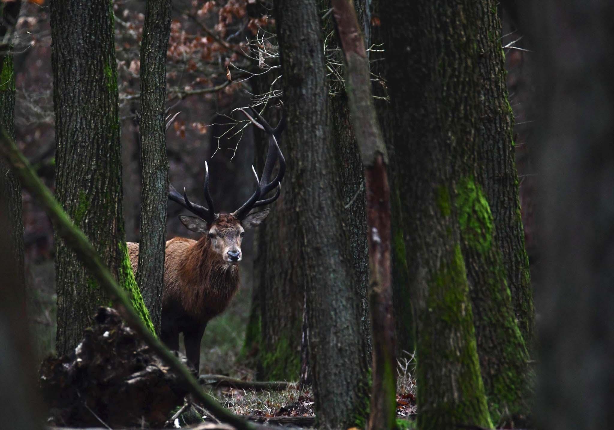Hubertus nog net zichtbaar tussen de 'wirwar' van bomen - Foto: ©Nel Vlieland