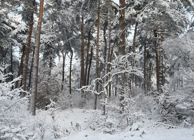 In het besneeuwde bos, ligt alles bedekt onder een witte deken – Foto: ©Louis Fraanje
